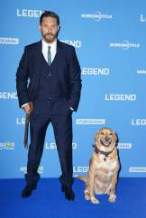 tom-hardy-dog