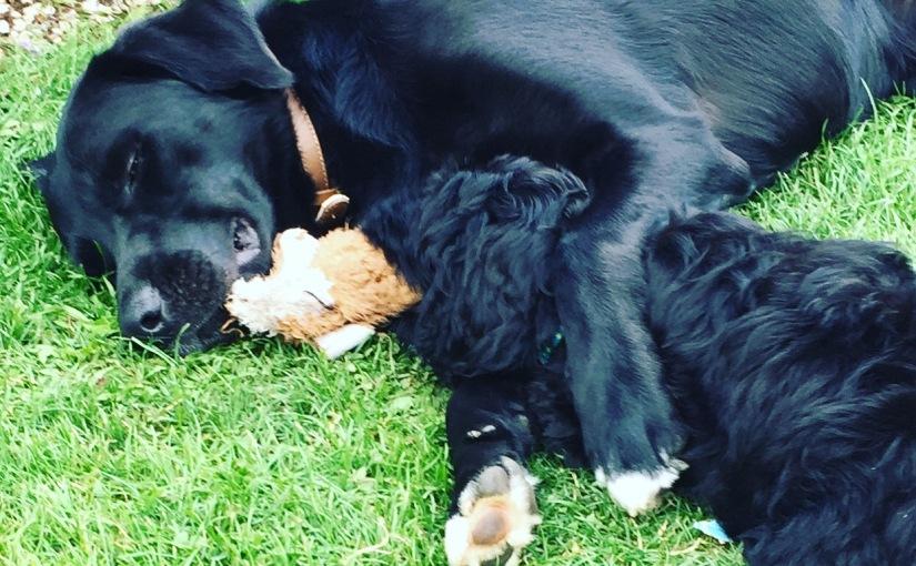 Tommyno Chosen In UK Top Dog Blog FeedspotList