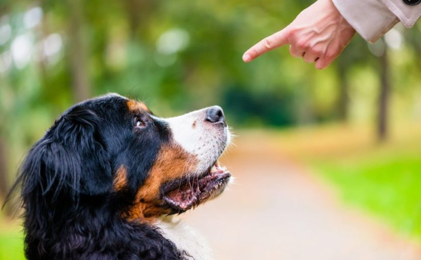 How not to train your dog – Part one (withvideos)